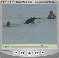 Watch Beach Walks with Rox #66
