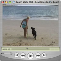 Watch Beach Walks with Rox #68