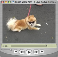 Watch Beach Walks with Rox #69