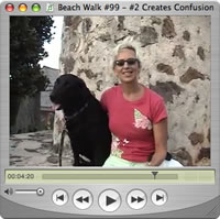 Watch Beach Walks with Rox #99
