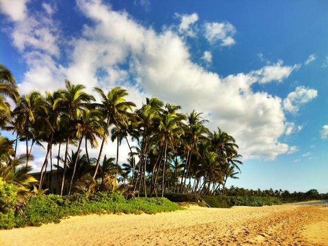 Wailea Palms on a Sunny Maui Friday