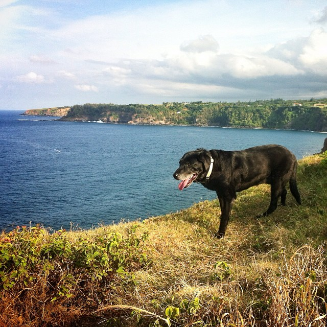 Lexi Dogg on a cliff walk