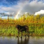 Lexi on her birthday, under the rainbow