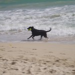 Lexi running on the beach with her ball